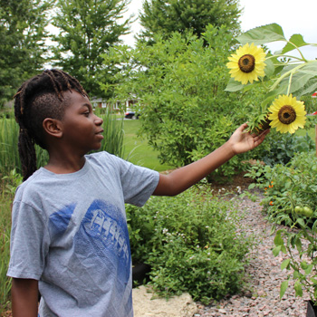 A young boy observing a sunflower.