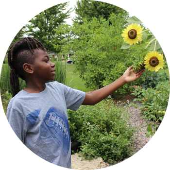 A young boy admiring sunflowers.